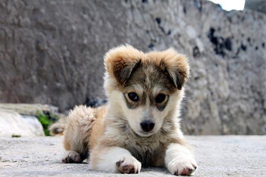 Le 5 cose che i padroni fanno e che i cani detestano