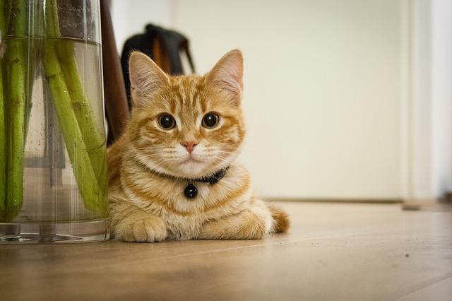 Come Insegnare Al Gatto A Fare I Bisogni Nella Lettiera