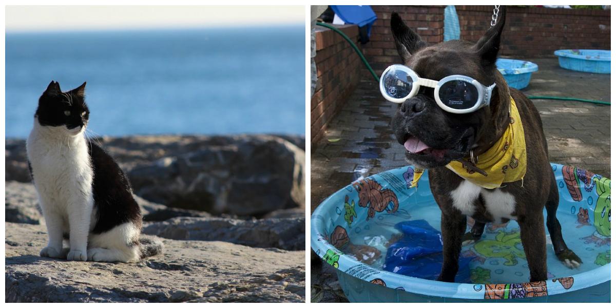 5 consigli per l'estate per cane e gatto