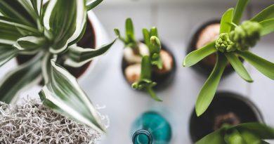 3 piante per purificare l'aria di casa
