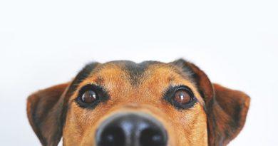 Perché i cani annusano le parti intime?